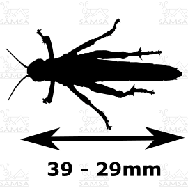 Medidas de Schistocerca gregaria mediana