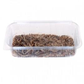 Zophobas morio envase 50 gramos