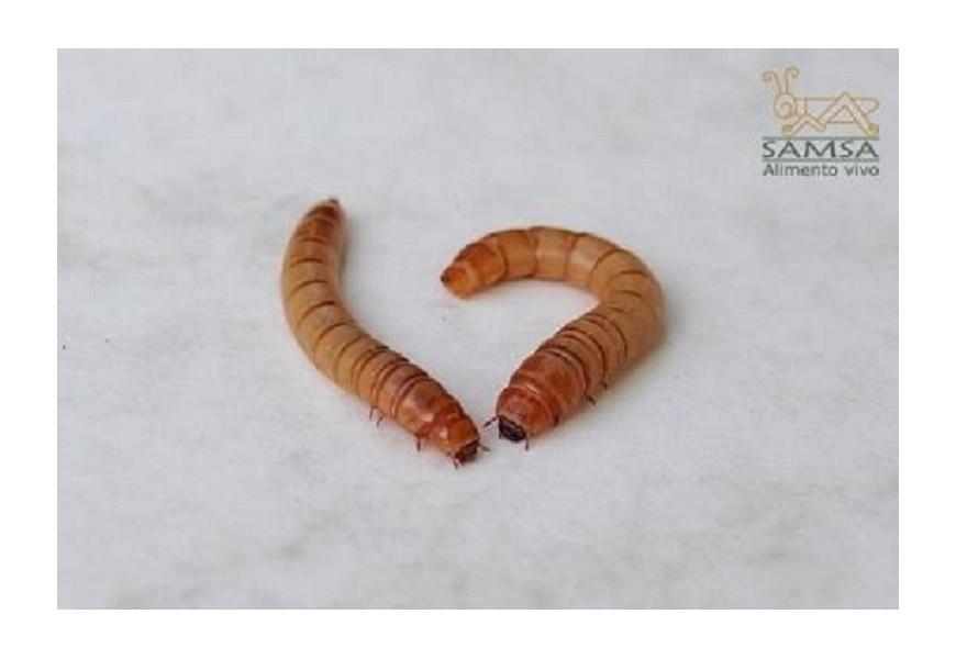 El gusano de la harina como alimento