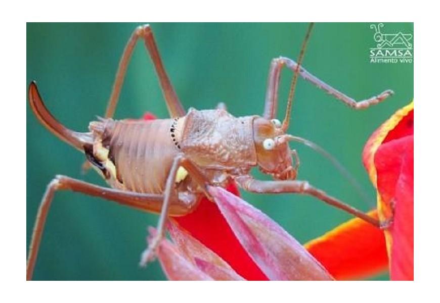 Los ojos de los insectos. La pseudopupila.