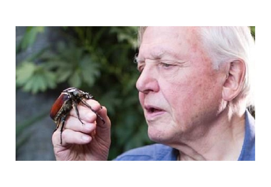 Sir David Attemborough 90 aniversario