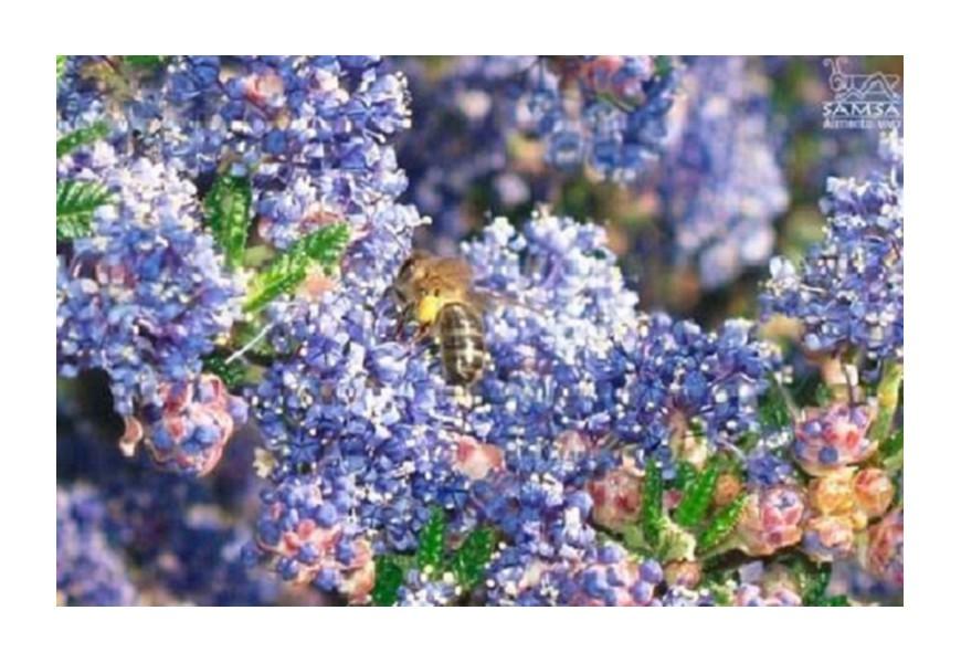 La cria selectiva de abejas